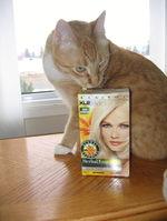 Blondcat